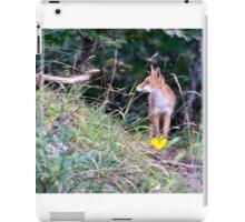 Volpe, su una mattina presto agguato, Casentino, Tuscany, Italy iPad Case/Skin