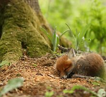 Sweet dreams by Remo Savisaar