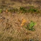 Fern in the Wind by Errne