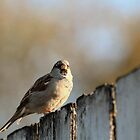 Keep your eyes OFF this sparrow!  by Keala