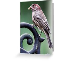 Patrick Purple Finch Greeting Card