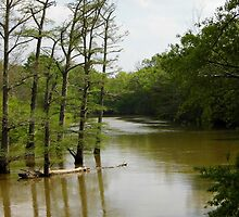 Crooked Creek Bayou at High Water by WildestArt