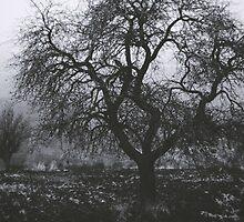Misty field by Eduina Jaupi
