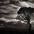 THE TREE IN THE DALES by leonie7