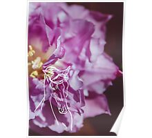 Purple Flower and Horse Poster