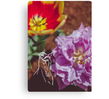Tulips and Horse Canvas Print