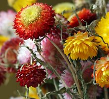 Paper Daisies by Ruth Durose