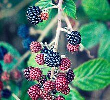 Ripening Blackberries by Vicki Field
