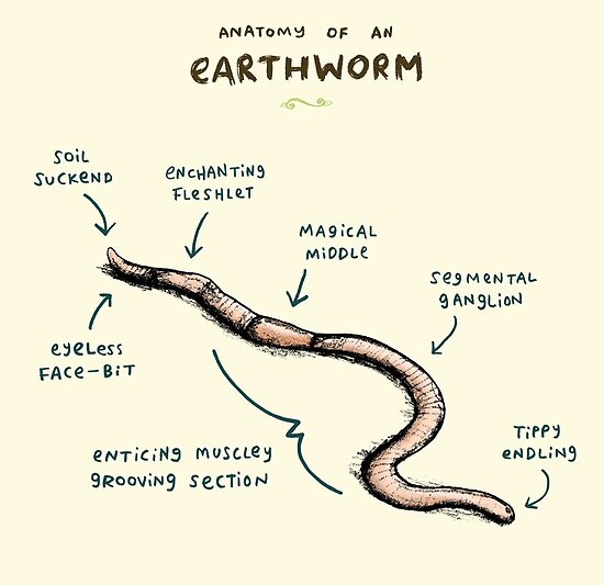 """""""Anatomy of an Earthworm"""" by Sophie Corrigan 