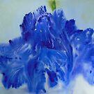 Iris by Deborah Pass