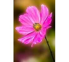 Cosmos 2 Photographic Print