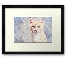 Red Tomcat Framed Print