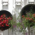 Two Tub Planters Displayed On Fence - Digital Artwork by Sandra Foster