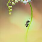 Lily of the valley by JBlaminsky