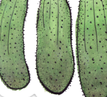 Cucumbers Sticker