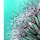 Sparkling Blue by ImageMonkey