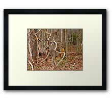 The Lure of the Thicket Framed Print