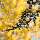 Yellow Fall Tree Leaves Landscape Pine Tree by BasleeArtPrints