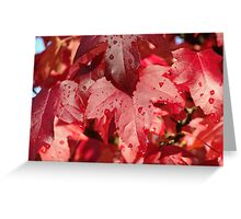 RED Autumn Leaves Art Prints Fall Trees Greeting Card