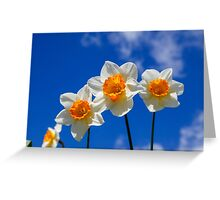 Spring Daffodil Flowers with Blue Sky Greeting Card