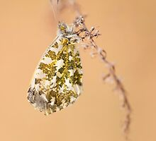 Impression with white-green butterfly by JBlaminsky