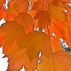 Orange is the Color of Autumn by John Butler