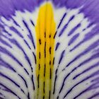 Macro purple and yellow flower by Pixie Copley LRPS