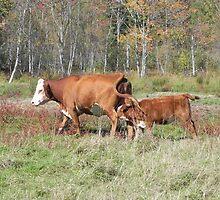 Milk On The Go by Martha Medford