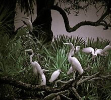Ibis and white Terns on a hammock  by KSKphotography