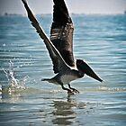 Pelican landing part deux by KSKphotography