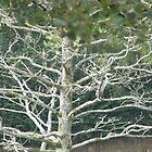 heron branch by brucemlong