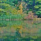 Autumn reflection 4 by Carolyn Clark