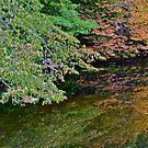 Autumn reflection 5 by Carolyn Clark