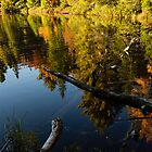 Mesmerizing Fall Reflections by Georgia Mizuleva