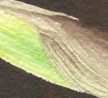 Daffodil Flower Bud Sticker