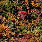The Glory of Autumn  by Kathleen Daley