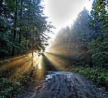 Rays of Light by Ed Warick