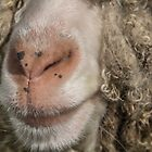 Macro Sheep Face by Pixie Copley LRPS