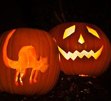 Halloween Pumpkins by Steve Purnell