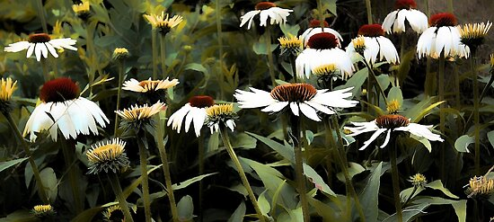 White Swan - Coneflower by T.J. Martin