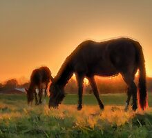 Dam and Foal - horses together in the sun. by verypeculiar