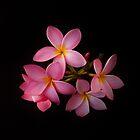 Plumeria by Barbara Morrison