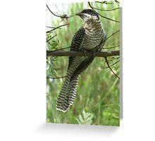 Common Koel : Eudynamys scolopacea Greeting Card