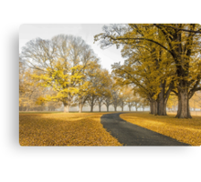Gostwyck Road is lined with Gold - Uralla NSW Australia Canvas Print