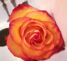 Orange beauty by freshmemories