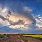 Shed with Canola by Peter Hammer