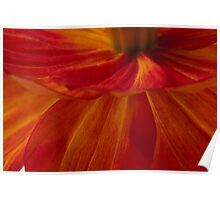 Orange Zinnia Flower Petals - Macro  Poster