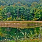 Autumn reflection 6 by Carolyn Clark