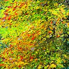 Impressions of Autumn by cclaude