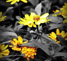 Yellow Flowers by rachfaceburrdog